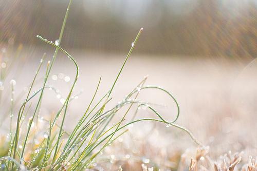 Grass Jewels (by Heather-L)
